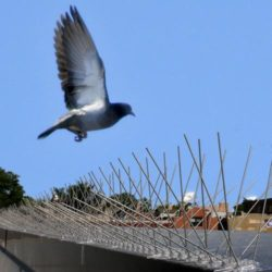 bird-spikes-500x500